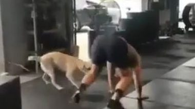 Man and Dog Exercising