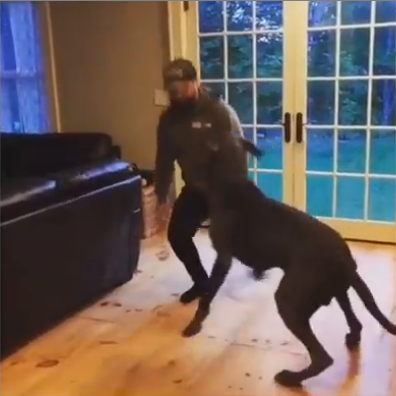 Dogs Do Lunges